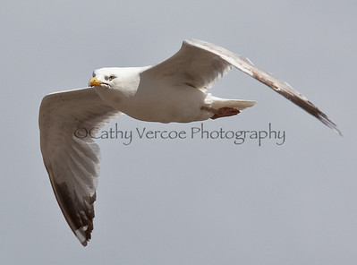 Seagull on the lookout