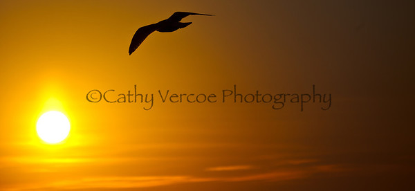 A seagull flies against the glow of the sun. Taken from Brighton Pier, UK