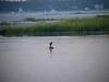 9/7/06 -- West Island Green Heron