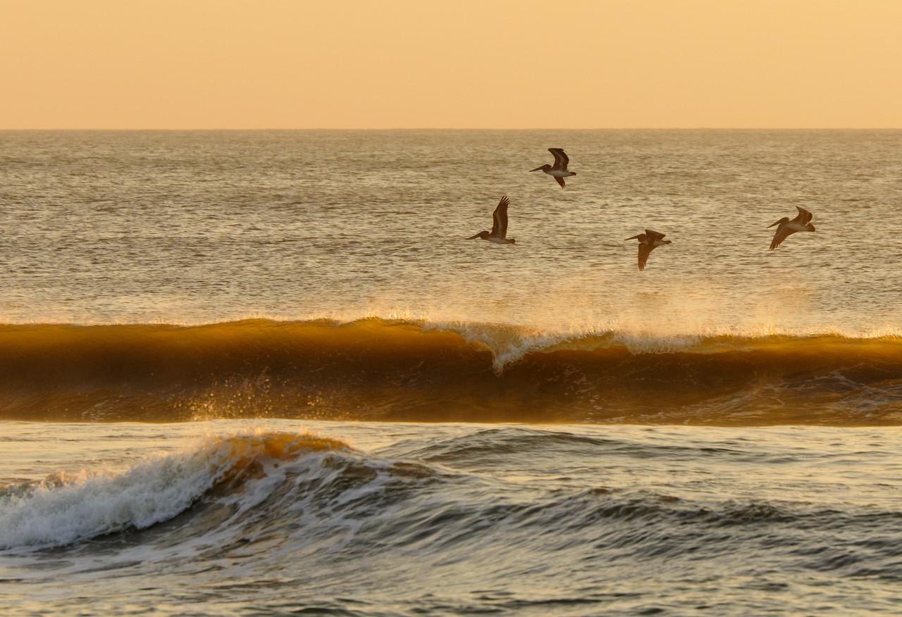 Brown Pelicans in Flight at Sunrise