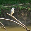 Black-crowned Night-Heron<br /> Creve Couer lake <br /> 2004-06-06 <br /> <br /> No. 10 on my Lifetime List of Birds <br /> Photographed in Missouri