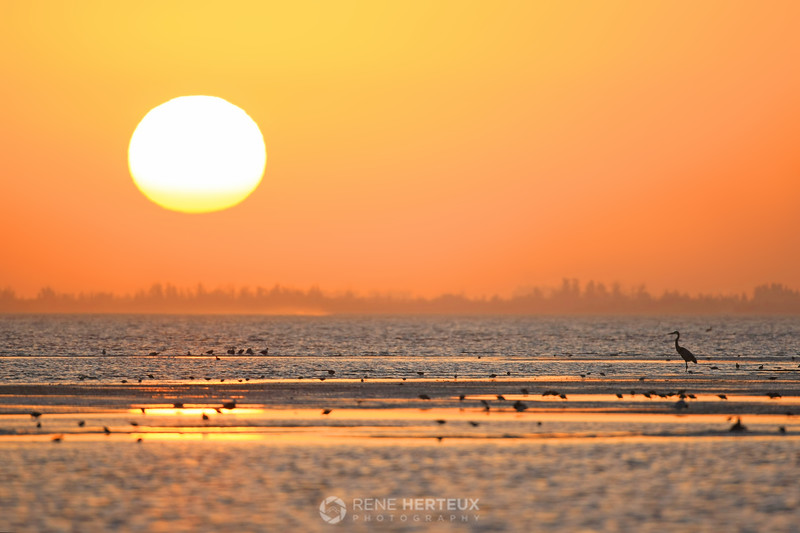 Sunrise with shore birds