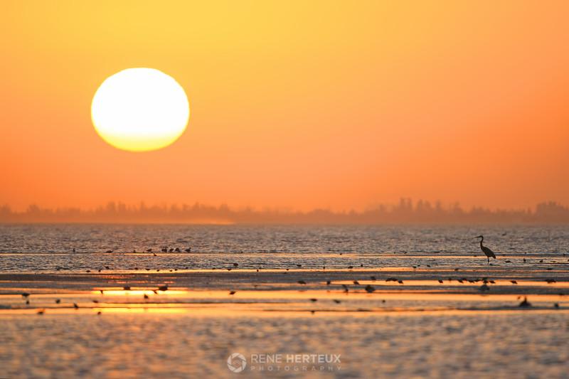Sunrise with shore birds