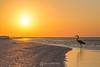 Great blue heron sunrise silhouette