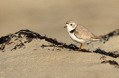 Early arrivals at Plum Island