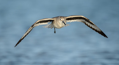 low flying