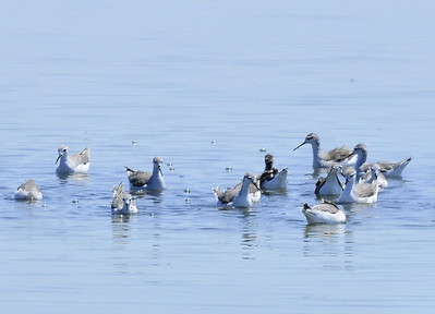 Salton Sea, Imperial County, CA 08/01/2008