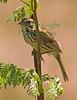 Sparrow6099(8 5x11)