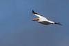 Pelican(8x12)4906