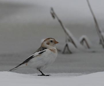 25.3.2012 Vantaa, Finland