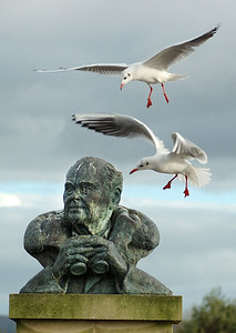 At last one of the Gulls managed to gain the ear of Sir Peter