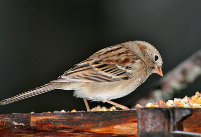Another Sparrow!