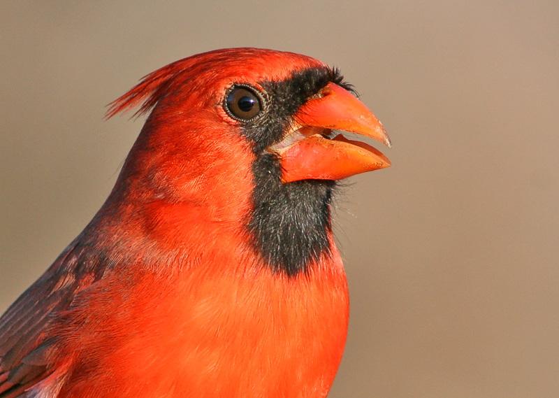 Portrait of a Cardinal.