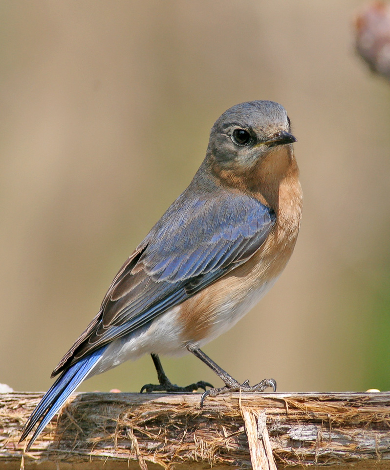 Bluebird Ain't it cute? Haha!