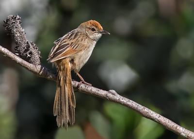 Small Land Birds