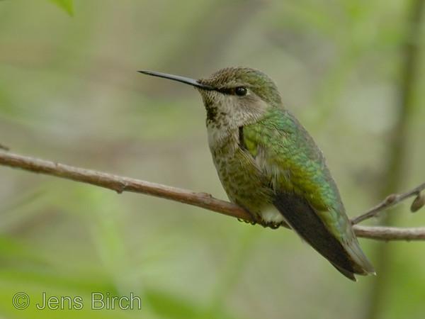Non-european Small Birds