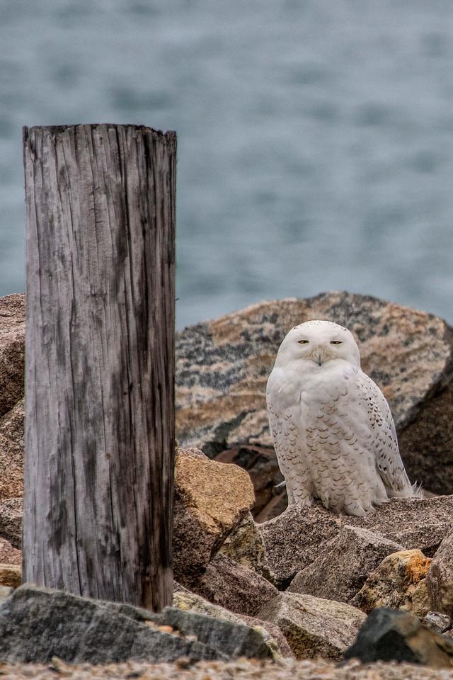 2-23-2016 Four Owls 168 SM
