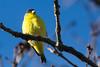 Bird0357