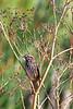 Sparrow8462