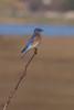 Bluebird8949