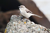 Mockingbird1762