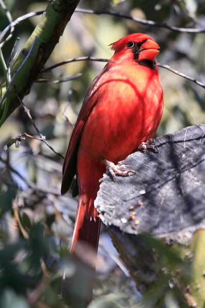 Cardinall5209