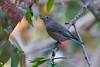 Bluebird9040