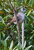Sparrow0082