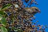Sparrow2329