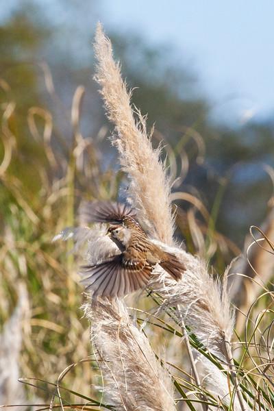 Sparrow2629