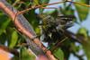 Bird3841