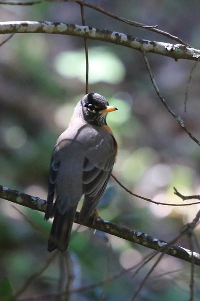 Robin0105