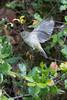 Littlebird9096