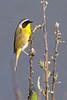Bird8272