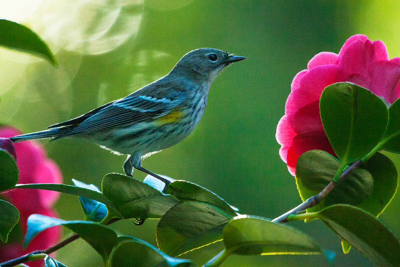 Bird0083