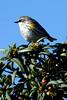 littleBird8438