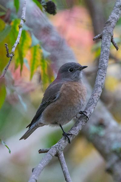 November - bird 9035 on bikepath in Corte Madera, CA