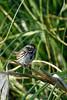 Sparrow8214(8x12)