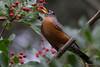 Robin(8x12)4675