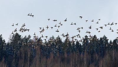 3.4.2012 Nurmijärvi, Finland