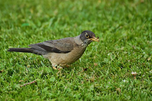 Birds of Agentina