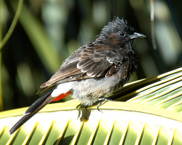 Birds of New Caledonia
