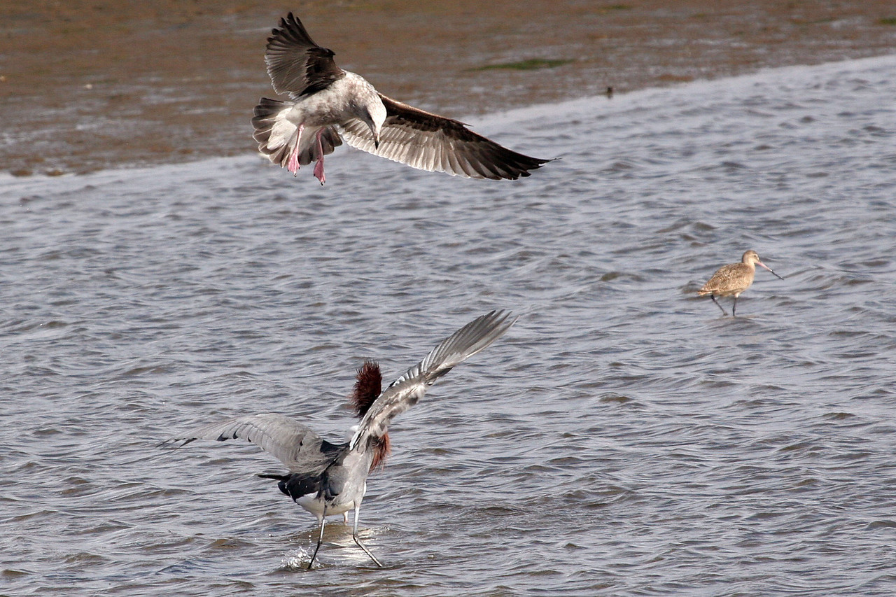 "The Godwit saying ""... let me outa here!"""
