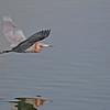 Reddish Egret - Bolsa Chica, Feb 2010. Even a lousy photogapher gets lucky sometime.