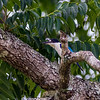 Forrest Kingfisher