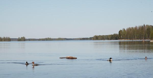 18.5.2014 Joutsa, Finland