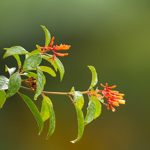 Variable Sunbird - Moshi, Tanzania