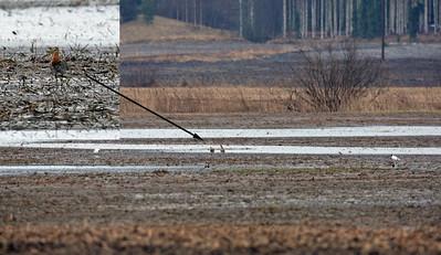 24.4.2012 Nurmijärvi, Finland