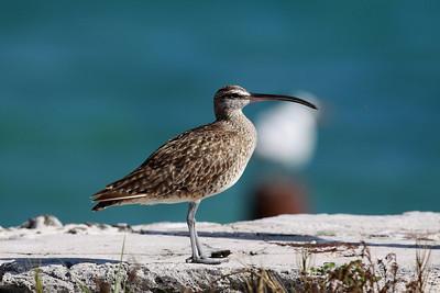 December 2009, Dry Tortugas National Park, Florida, USA