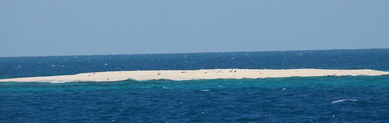 December 2009, Dry Tortugas National park, Florida, USA  Tällä hiekkasärkällä, jonka nimi lienee Hospital Key, pesii USA:n ainoa naamiosuulakolonia. Joulukuussa 2009 sillä lepäili naamiosuulia, jotka erottuvat tavallisesta suulasta mustien kyynärsulkien perusteella. Kuvasta ne voi juuri ja juuri nähdä.  On this tiny sandbar (that should be Hospital Key) rested several Masked Boobies seen from boat en route to Dru Tortugas. This is the only nesting location of Masked Boobies in North America.